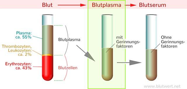 Blutwert Basophile