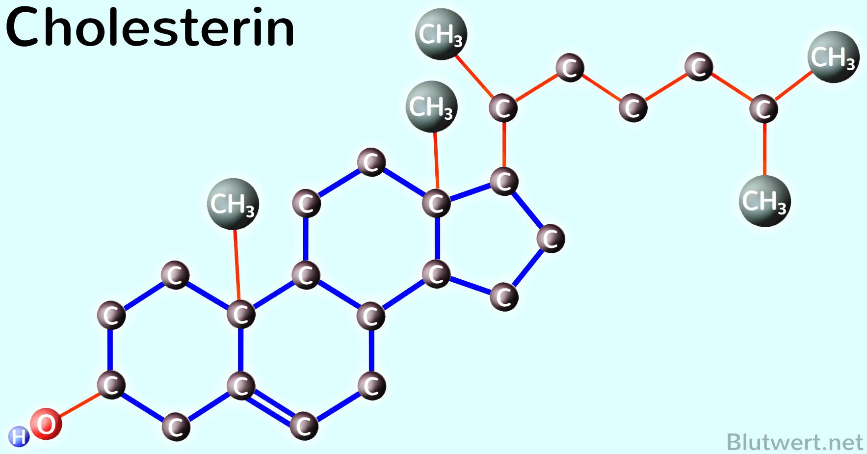 Sexualhormone cholesterin