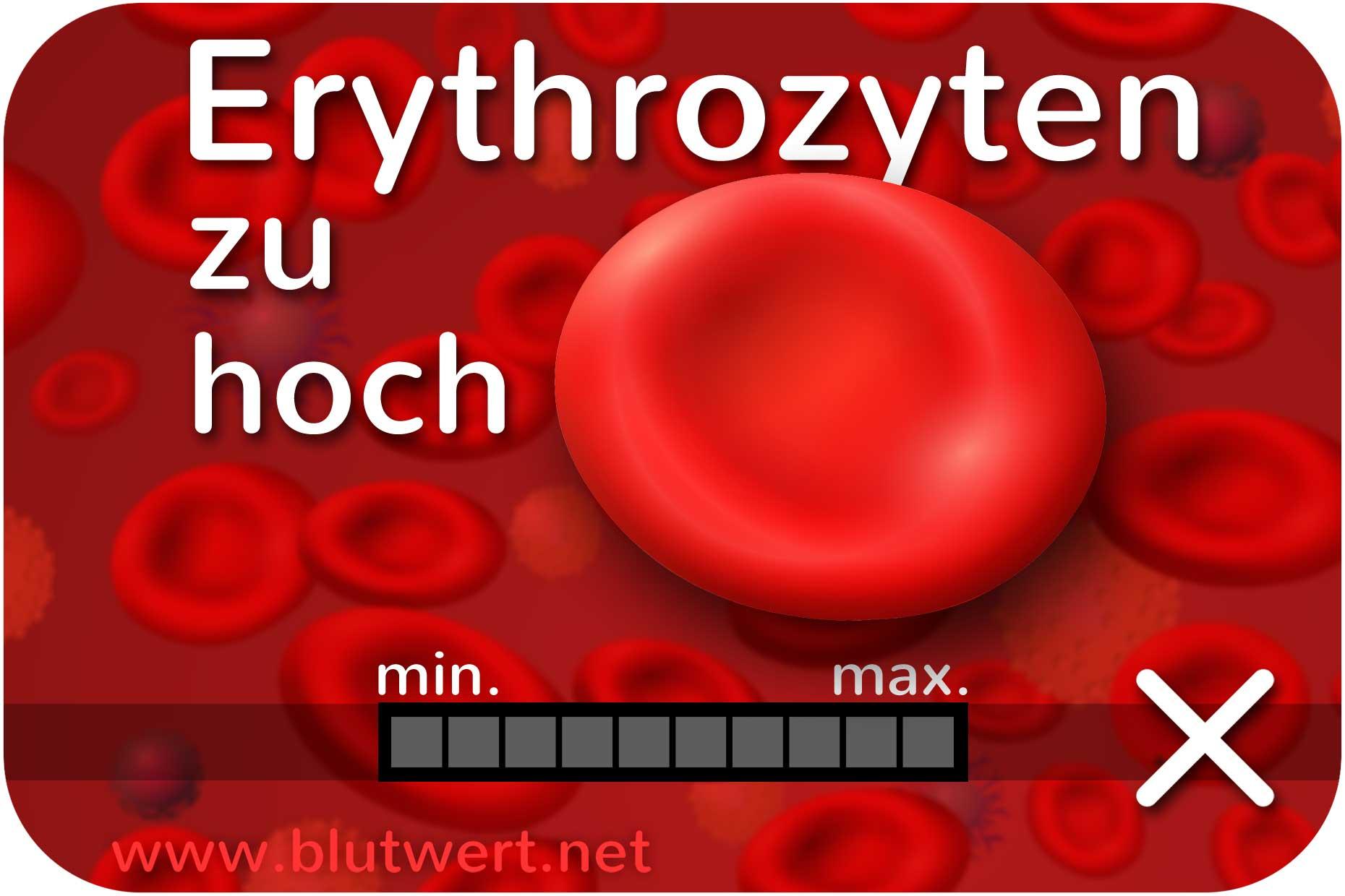 Erythrozyten zu hoch blutwert ery erh ht for Kuchenschranke zu hoch