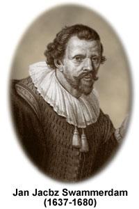 Portrait von Jan Swammerdam