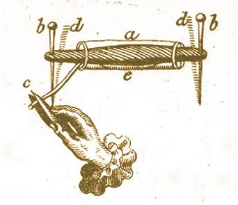 Froschschenkel-Muskel, Zeichnung von J. Swammerdam