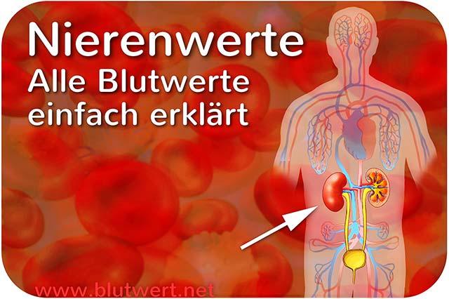 Nierenwerte Im Blutbild